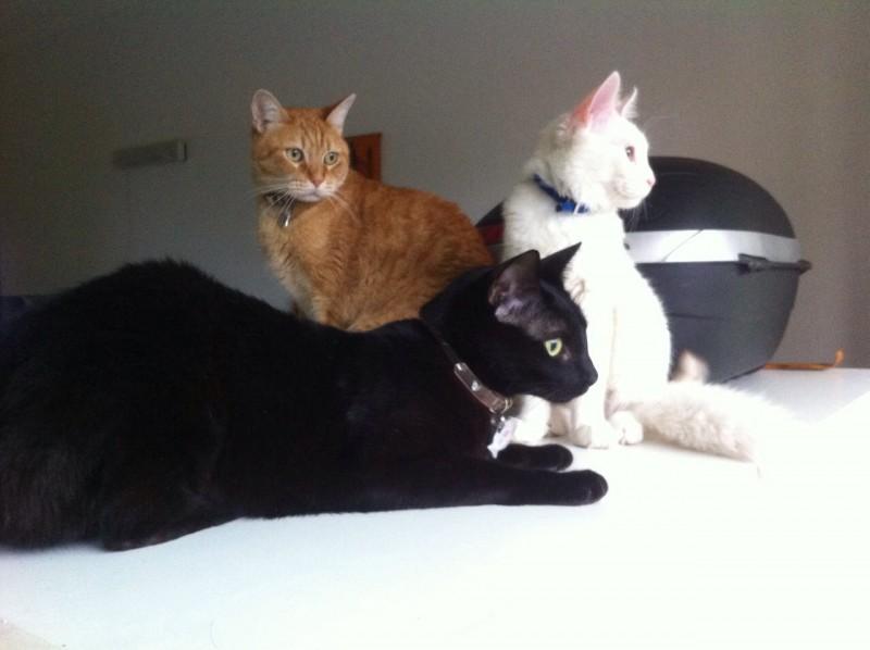Mika, Elio and Milo